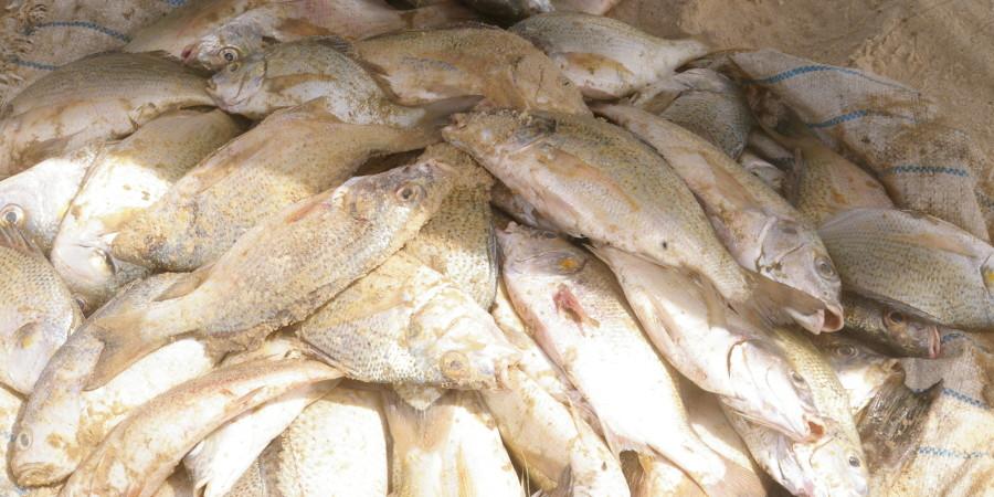 Pêche : les débarquements au Sénégal en hausse au premier trimestre 2018