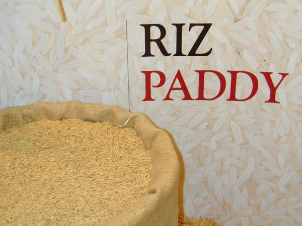 Autosuffisance  en riz  à l'horizon 2017 : La JICA  partante pour  la  réalisation  de la sécurité alimentaire