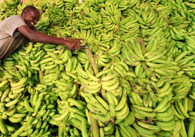 Denis Loeillet sur la filière Banane : « Les perspectives sont bonnes pour les exportateurs ouest-africains »