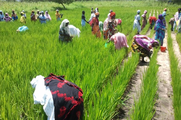 Les femmes rurales comblent le fossé énergétique dans les zones hors-réseau au Sénégal