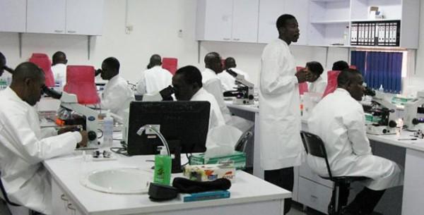 Défis du domaine agricole Le Pr Cheikh Békaye Gueye souligne les axes où le Sénégal doit forcément revoir sa copie.