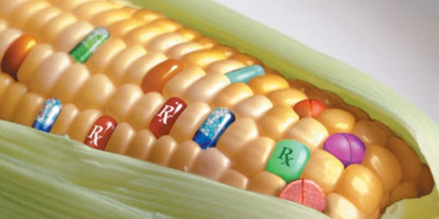 Usage des OGM, le Burkina Faso un cas d'école pour la sous-région
