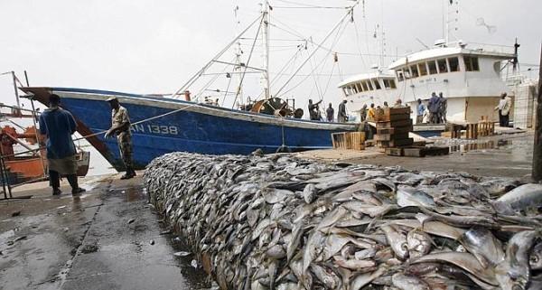 Pêche : Une fraude plus de 370 millions FCFA découverte sur les licences entre 2000 et 2014, les Chinois vous saluent bien !