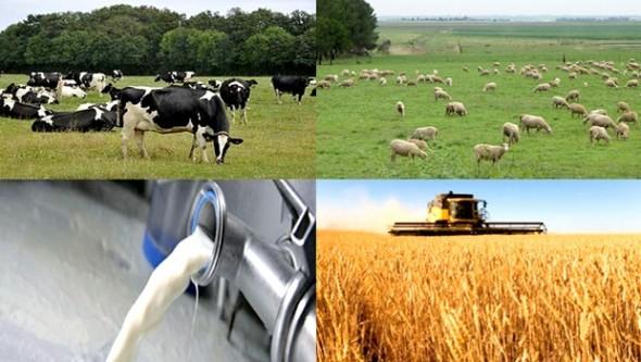Journée mondiale du Lait- Oxfam pour des mesures efficaces et adaptées visant à développer la filière laitière locale