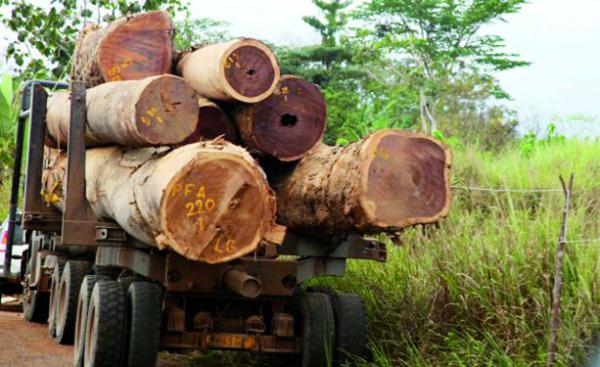 Kolda/Lutte contre les coupes abusives de bois : Deux individus coffrés, du matériel saisi