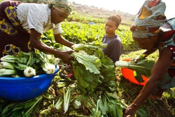 Meilleures pratiques de développement durable : Le Niger et le Sénégal remportent chacun un prix au concours Expo 2015 de la FAO