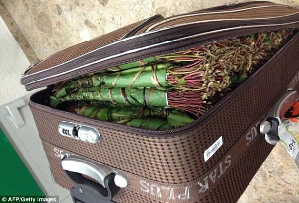 Drogue :  72 kg de Khat estimés à plus de 30 millions saisis à l'aéroport  de Dakar
