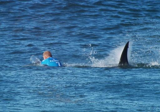 Ce surfeur français qui écarte un requin à coups de poing !