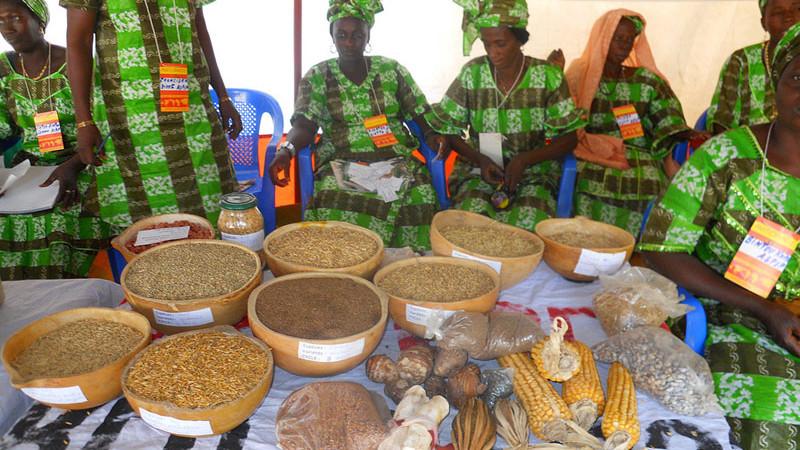 Céréales:  L'offre mondiale évaluée à 3023,9 millions de tonnes