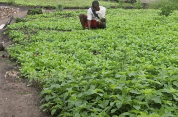 Hivernage : La production menacée dans certaines localités du nord du pays