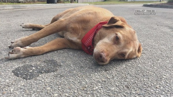 Un chien reste pendant des heures à l'endroit où sa propriétaire est morte accidentellement