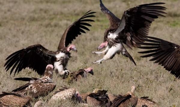 Procès Habré : Les vautours s'invitent au déballage de l'horreur