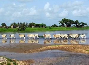 Palmarin Sénégal