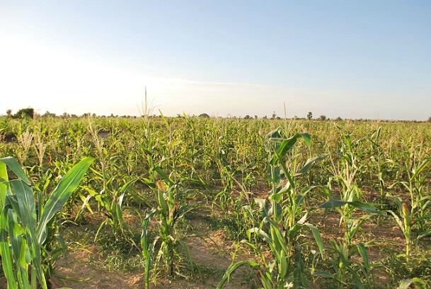 Togo : sous menace de retrait, désormais les propriétaires privés de terres agricoles rurales tenus de les mettre en valeur