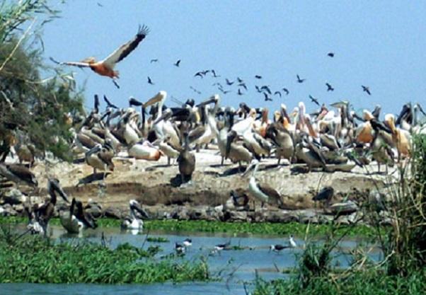 Quatre  merveilles de l'écotourisme sénégalais