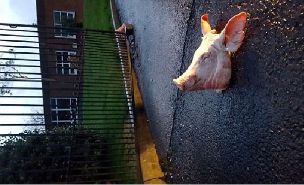 Attaque islamophobe à Blackburn, deux têtes de porcs ''offerts'' à une école musulmane
