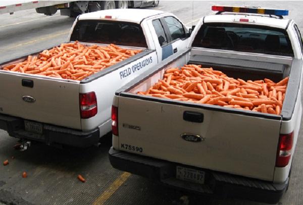 Dealers de plus en plus créatifs,  500 millions de dollars de drogue en forme de carotte interceptés au Texas