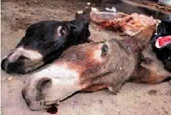 De la viande d'âne sur nos marchés  C'est une voix autorisée qui confirme l'info