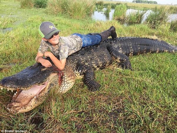 Floride  Un alligator de plus de 4 mètres et pesant plus 362  kg tué par des chasseurs