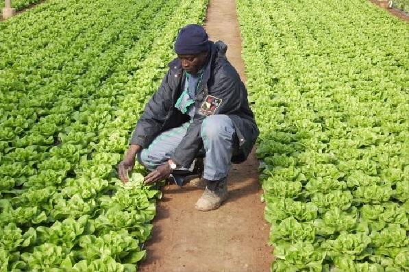 Amélioration de la productivité agricole Banque mondiale en soutien aux petits producteurs sénégalais