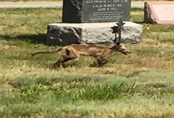 New Hampshire Un étrange animal aperçu dans un cimetière, prudence recommandée