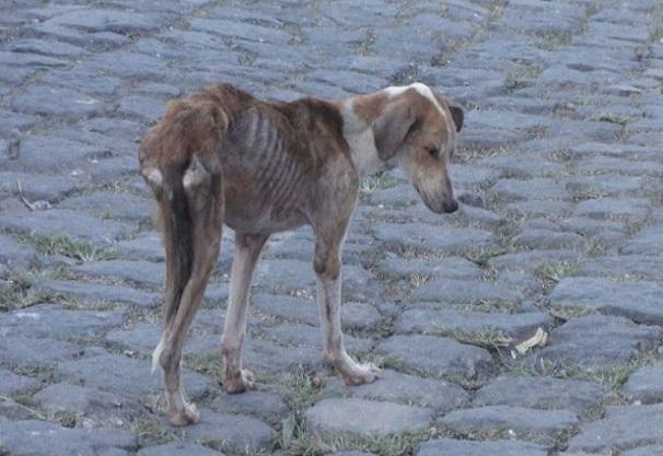 Kaolack/Lutte contre la rage Une cinquantaine de chiens-errants abattue
