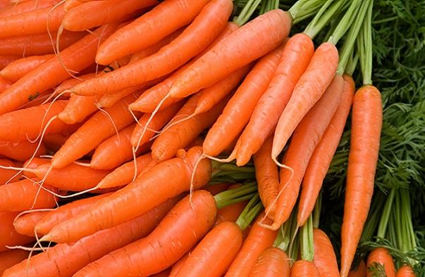 Maraîchage/Zone des Niayes Des producteurs de carottes dans une vive inquiétude
