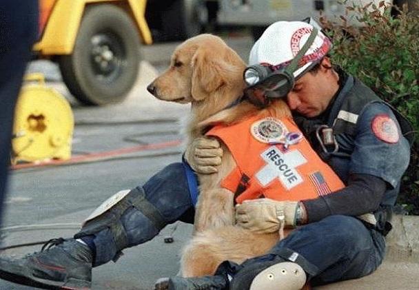 Son propriétaire dans un état très grave, un chien brise une vitre et alerte des passantes