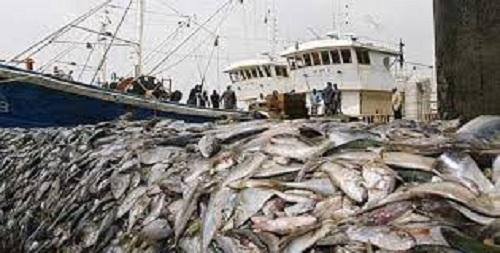 Oumar Gueye sur la  Pêche illicite : « Nous perdons 150 milliards par an »