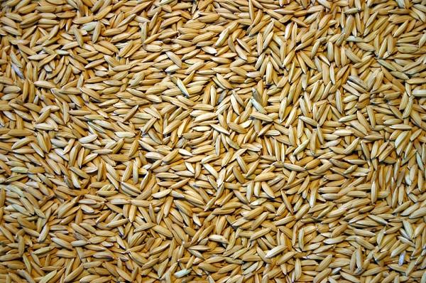 Riz : une offre mondiale de 600,1 millions de tonnes prévue