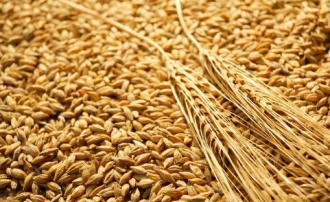 Offre mondiale de céréales en janvier 2017 : 2537,2 millions de tonnes prévues par le département américain de l'agriculture