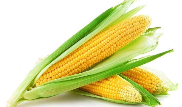 Maïs : 0,2%  de recul du prix du kilogramme