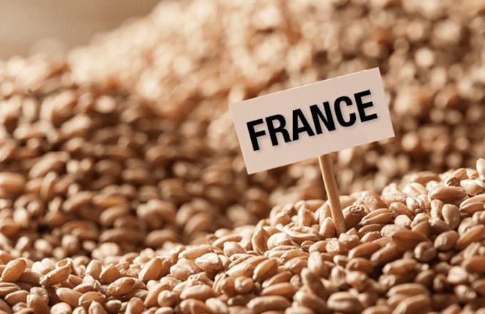 Blé tendre français : 740,4 millions de tonnes de demande mondiale en février 2017