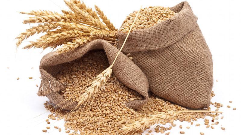 Offre mondiale de céréales en février 2017: Les prévisions tablent sur 2543,4 millions de tonnes