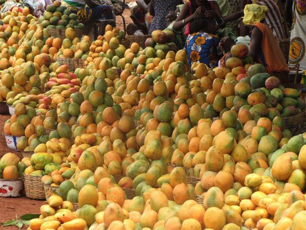 Partenariats commerciaux : MISSION DE PROSPECTION AU MAROC POUR LA MANGUE DU SENEGAL