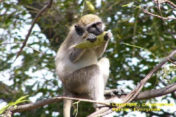 Sénégal : Développement du tourisme, et si la solution venait de l'écotourisme ?