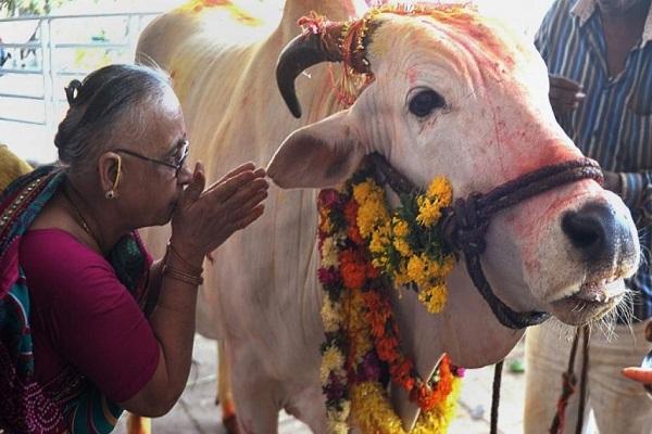 Inde : une campagne nationale lancée contre le lynchage des musulmans qui consomment des vaches