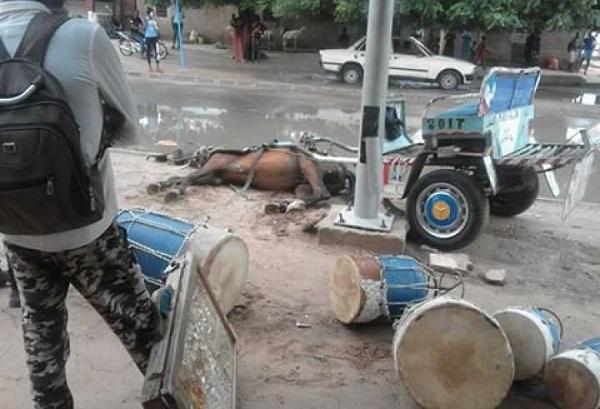 Louga : Un cheval attelé meurt électrocuté, son conducteur sauvé de justesse