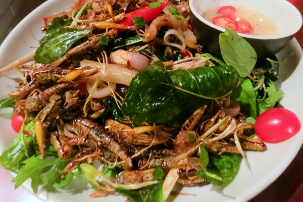 Gastronomie mondiale : Saviez-vous qu'il existe des insectes comestibles ?