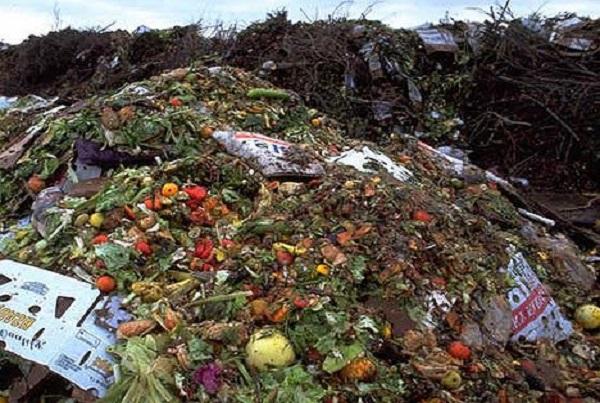 Lutter contre le gaspillage alimentaire : l'UE et la FAO décident d'unir leurs forces