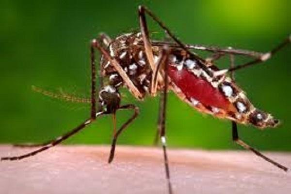 Santé : retour de la dengue au Sénégal, ce qu'il faut savoir sur cette maladie