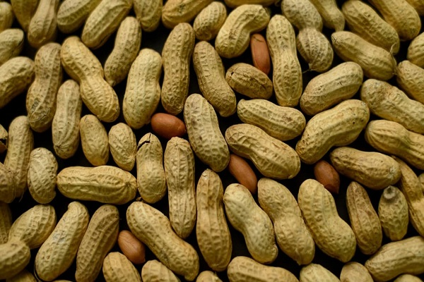 Le prix du kilo fixé à 210 francs : les producteurs d'arachide plutôt déçus