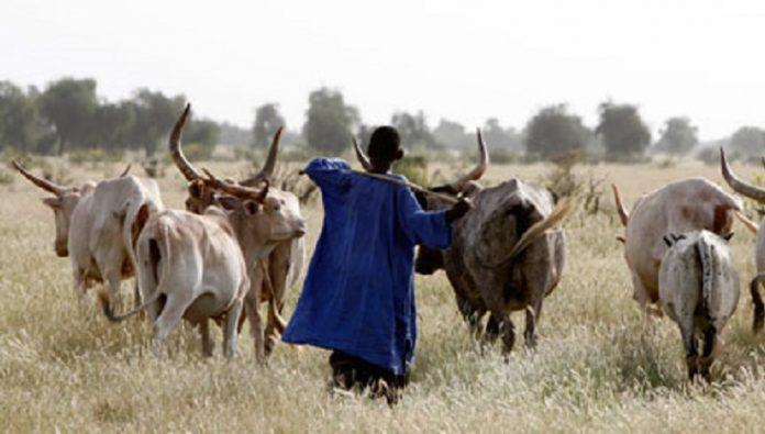 CEDEAO : des propositions et recommandations pour des solutions durables de résolution des conflits entre agriculteurs et éleveurs