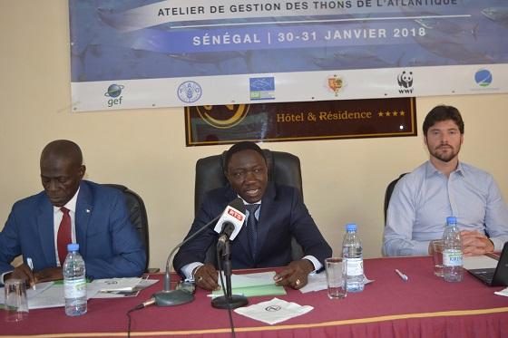 Pour l'amélioration de  la compréhension des stratégies de gestion durable des thons : Plus de 40 experts en conclave  à Dakar