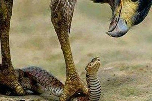 Insolite au Nigeria : accusée de détournement, la comptable indexe un serpent