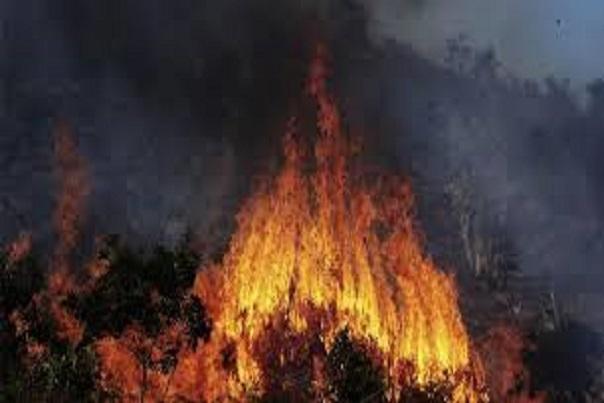 Togo : l'environnement menacé par des feux de végétation, des espèces protégées chassées et tuées