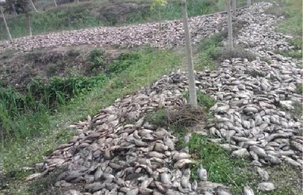 Togo : alerte lancée pour des poissons probablement empoisonnés, le gouvernement appelle la population à la vigilance