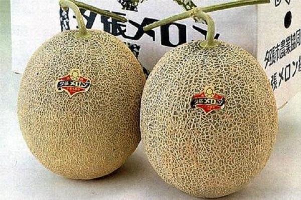 Prix record pour un fruit au Japon : Deux melons vendus à plus de 16 millions de francs CFA