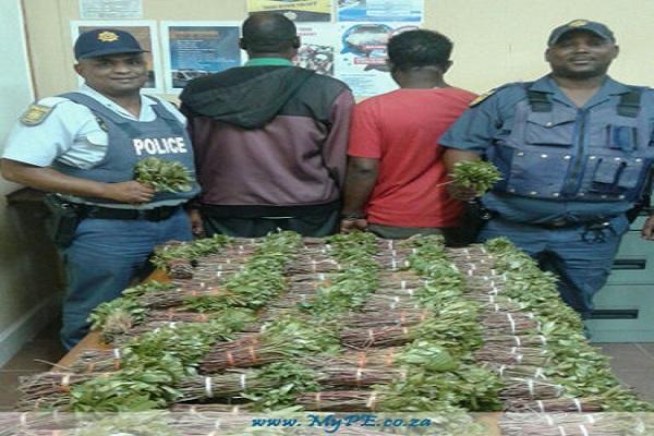 Trafic de drogue en Tanzanie : le « malade » d'un ambulancier, sirène hurlante, était en réalité 800 kilos de khat