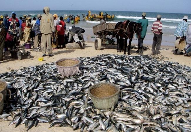 Pêche artisanale :  La raréfaction des ressources halieutiques déplorée par les acteurs